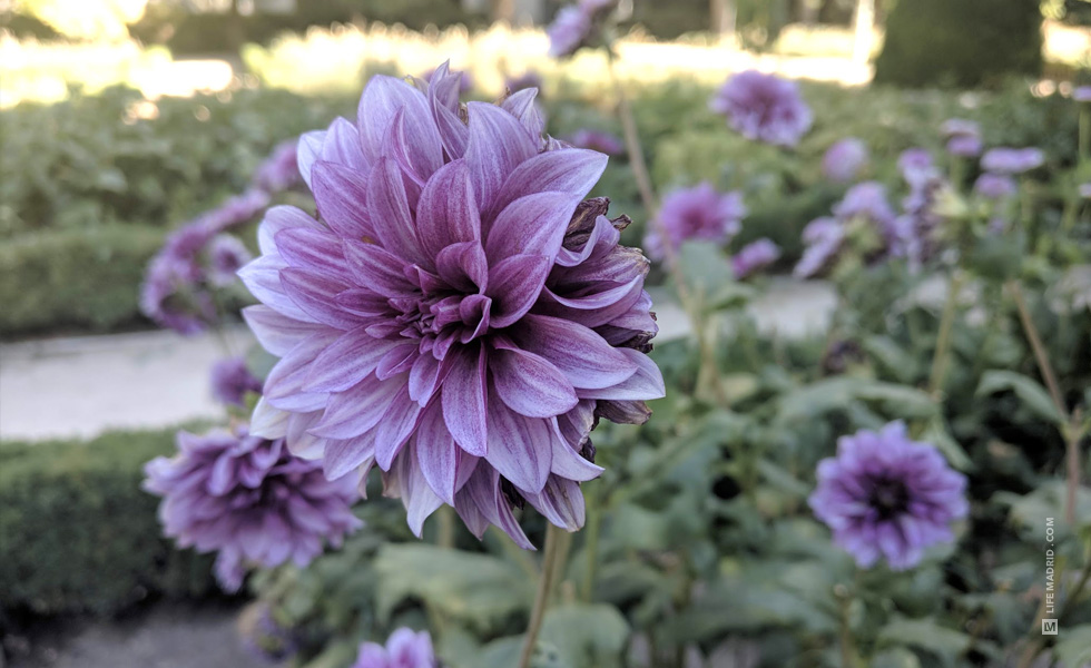 Flores - Real Jardín Botánico